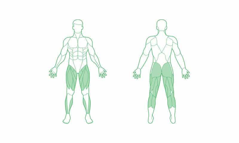 oberschenkelmuskel