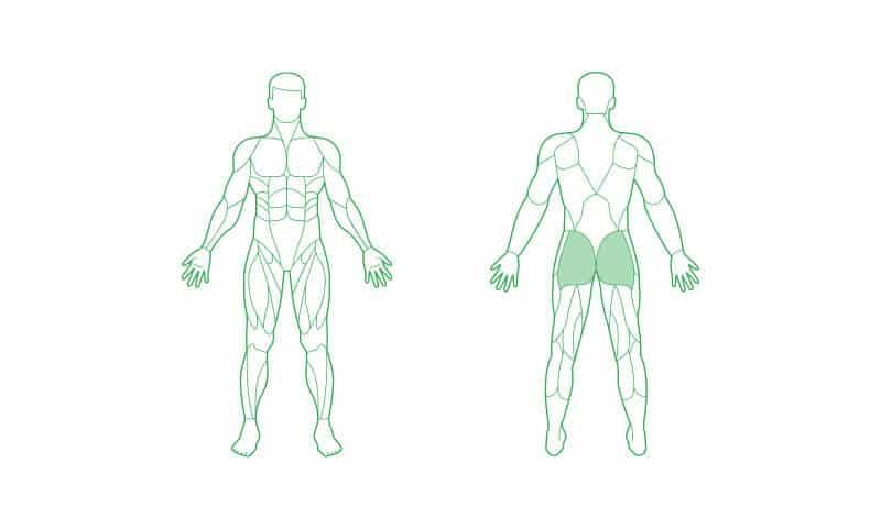 Gesäßmuskeln