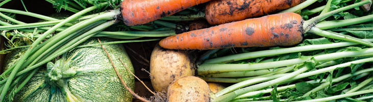Gemüse_schonkost