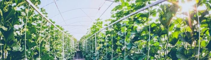 Ketogene Ernährung Nachhaltigkeit