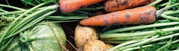 Günstig gesund essen Gemüse