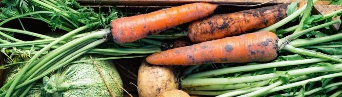 smart shoppen ernährung einkaufen gesund