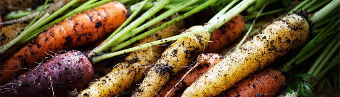 Karotten vitamin A nährstoffe