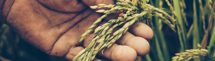 food trends 2020 alternativen weizen soja